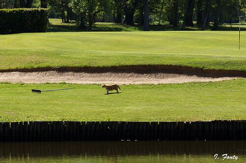 この画像は、サイトの記事「関西オープン ゴルフ おすすめ動画満載! YouTube無料視聴映像まとめ!」のイメージ写真画像として利用しています。